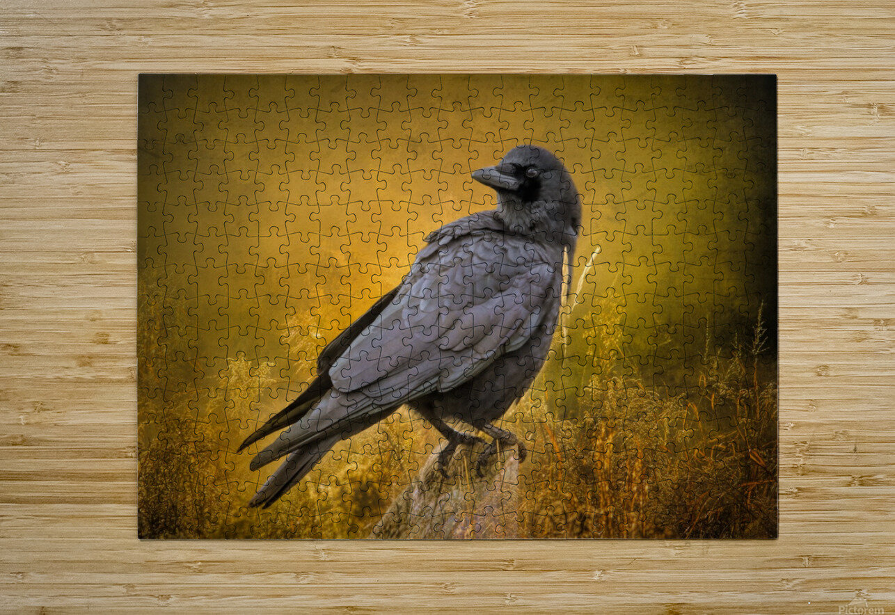 Black Crow  HD Metal print with Floating Frame on Back