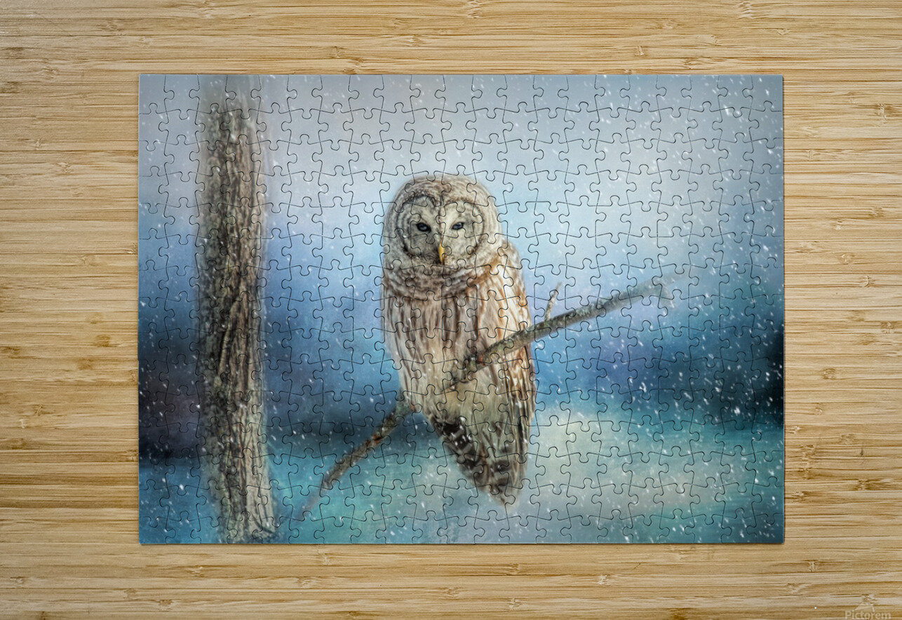 Barred Owl Solitude  HD Metal print with Floating Frame on Back
