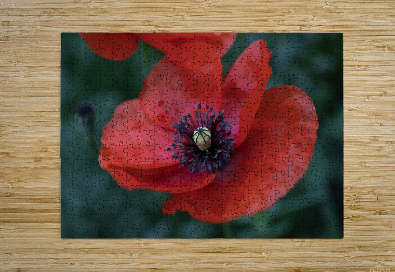 PRECIOUS  HD Metal print with Floating Frame on Back