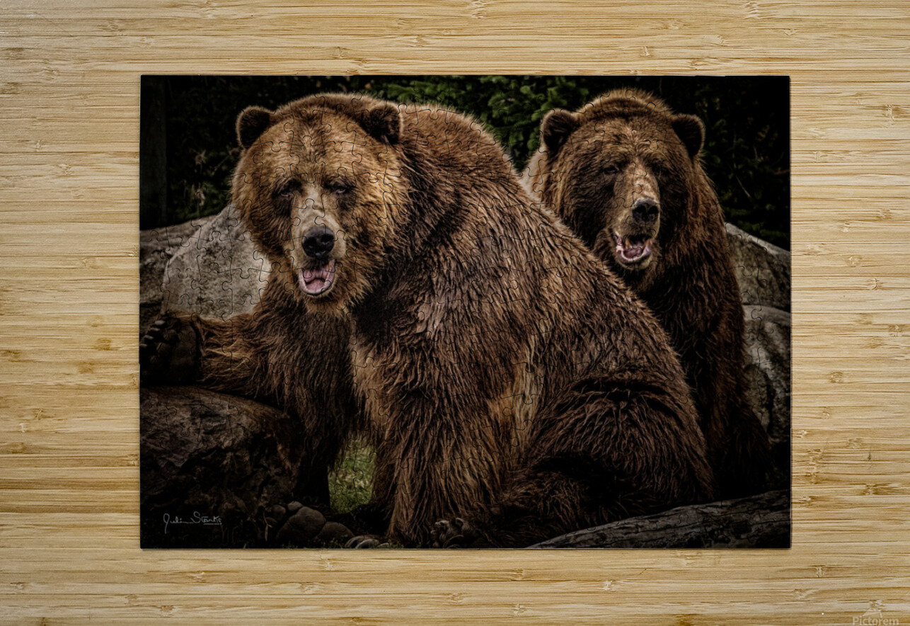 Brown Bear Brothers  HD Metal print with Floating Frame on Back