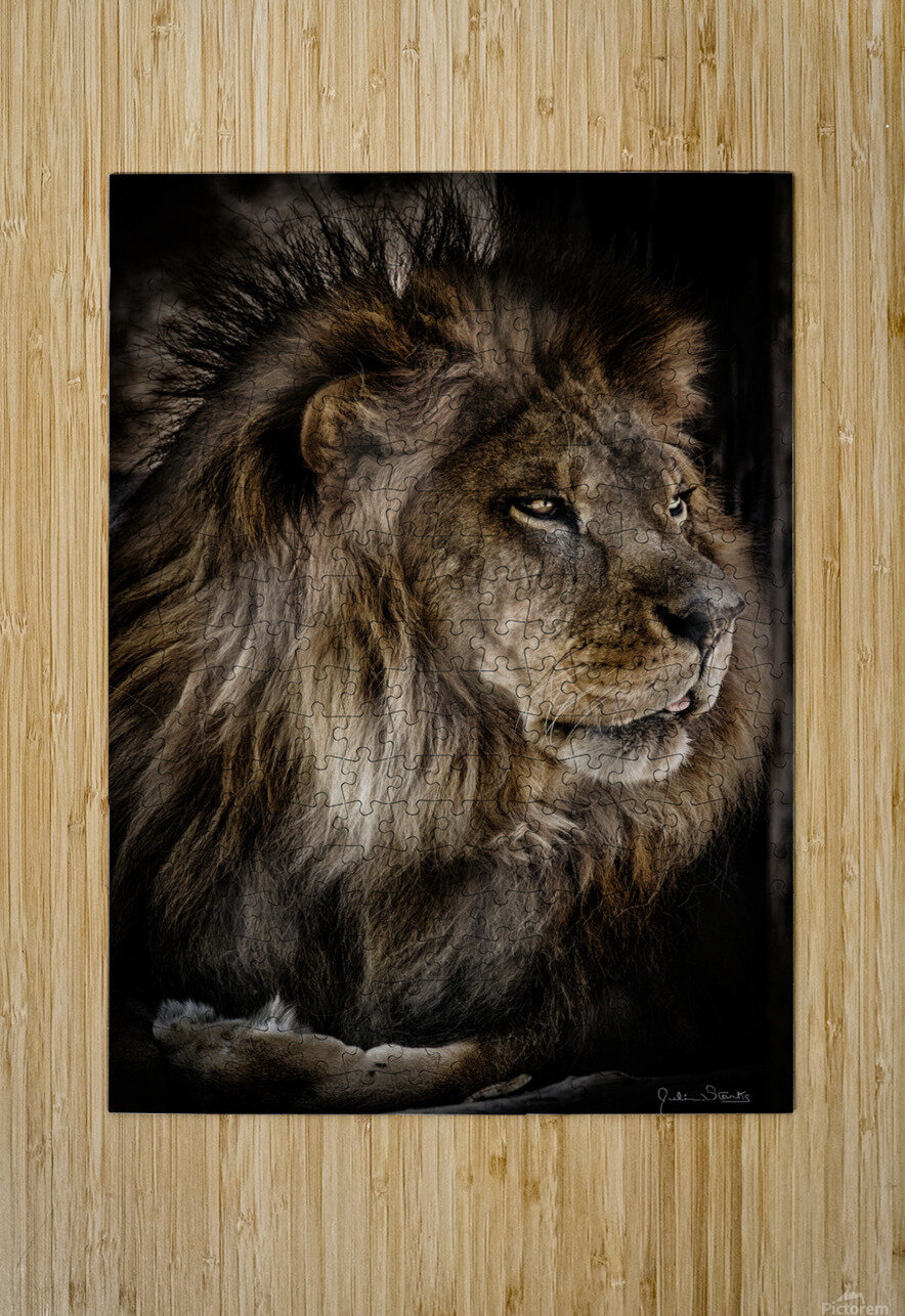 A Lions Profile  HD Metal print with Floating Frame on Back