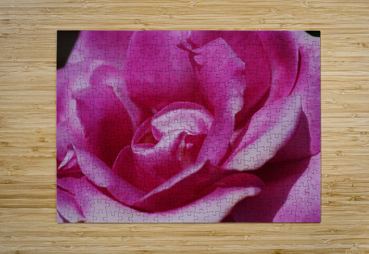 Heart Of Pink Rose  HD Metal print with Floating Frame on Back