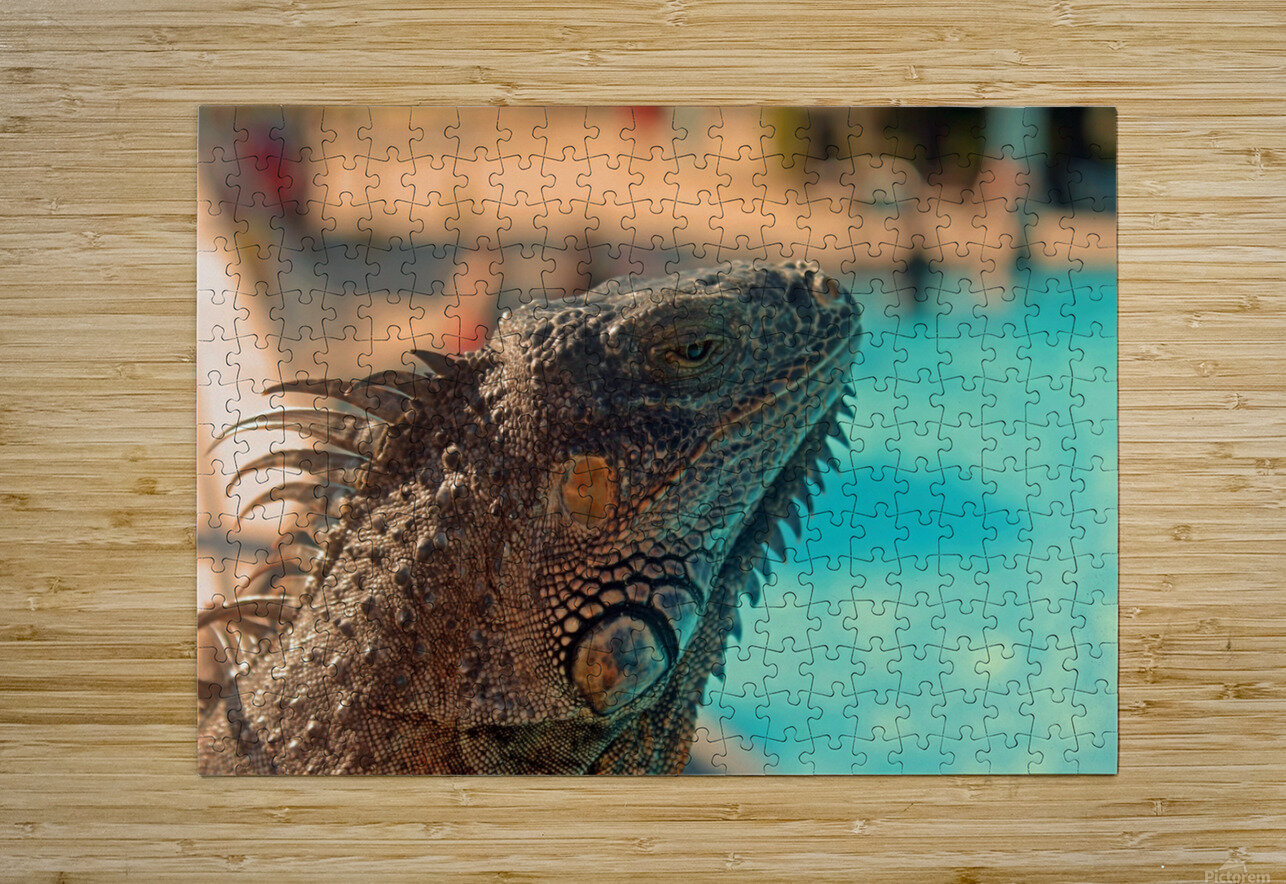 Looking into the Distance  HD Metal print with Floating Frame on Back