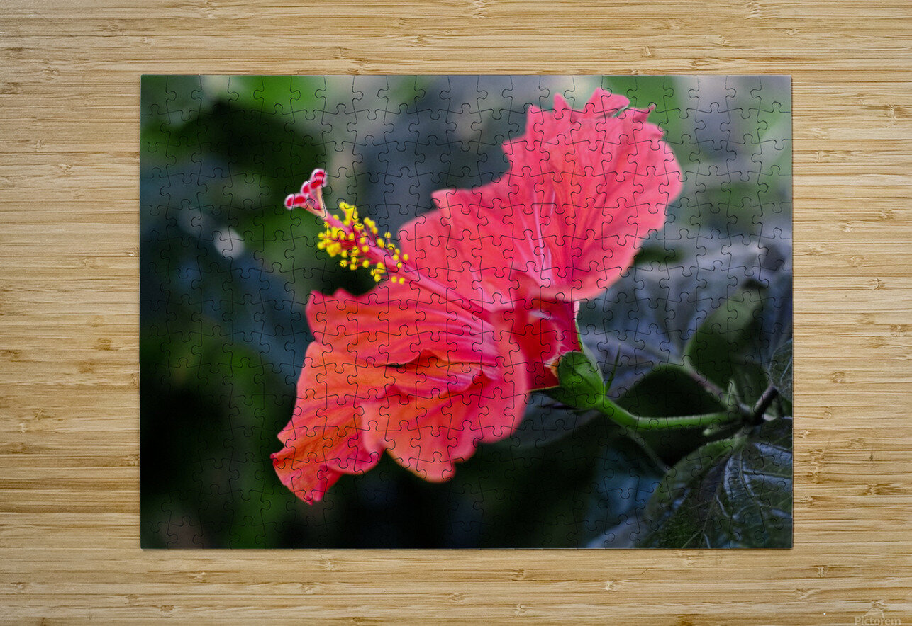 Clear Cutting  HD Metal print with Floating Frame on Back