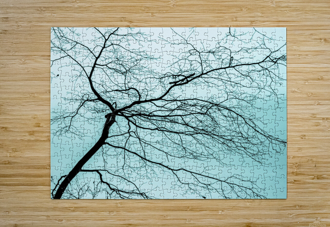 Branchlets  HD Metal print with Floating Frame on Back