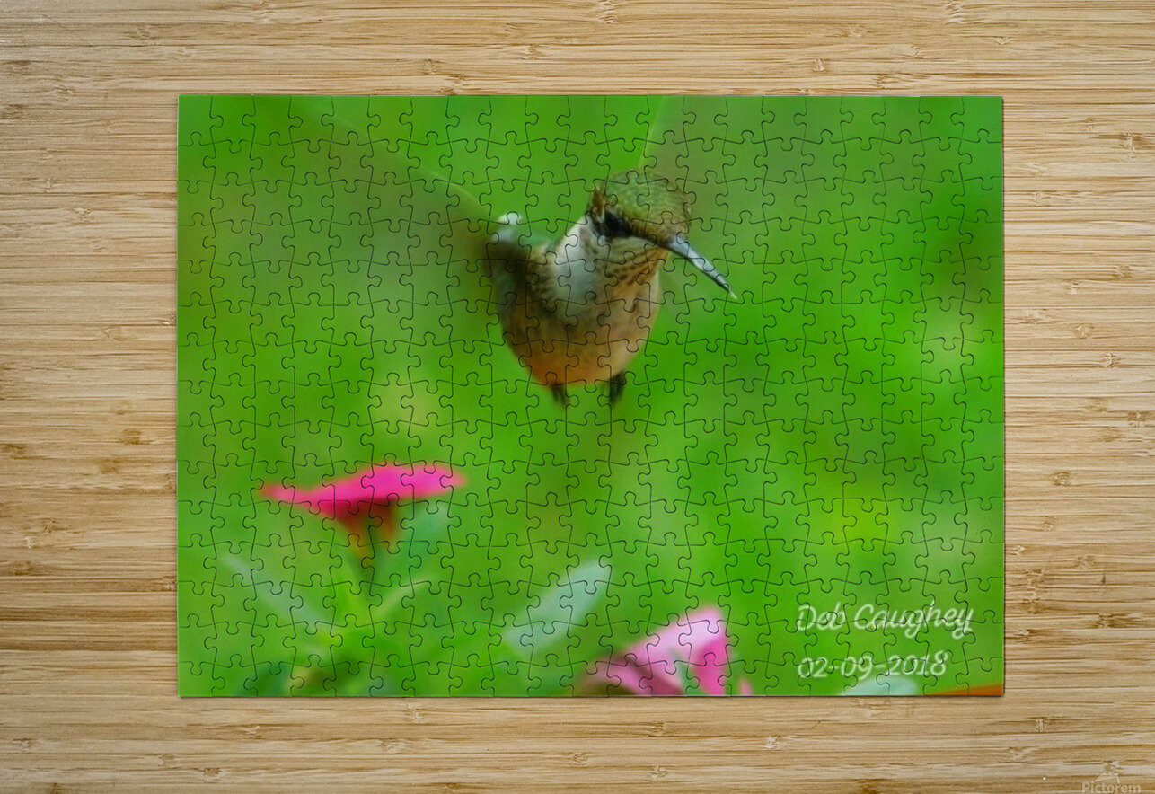 Ruby throated hummingbird  HD Metal print with Floating Frame on Back