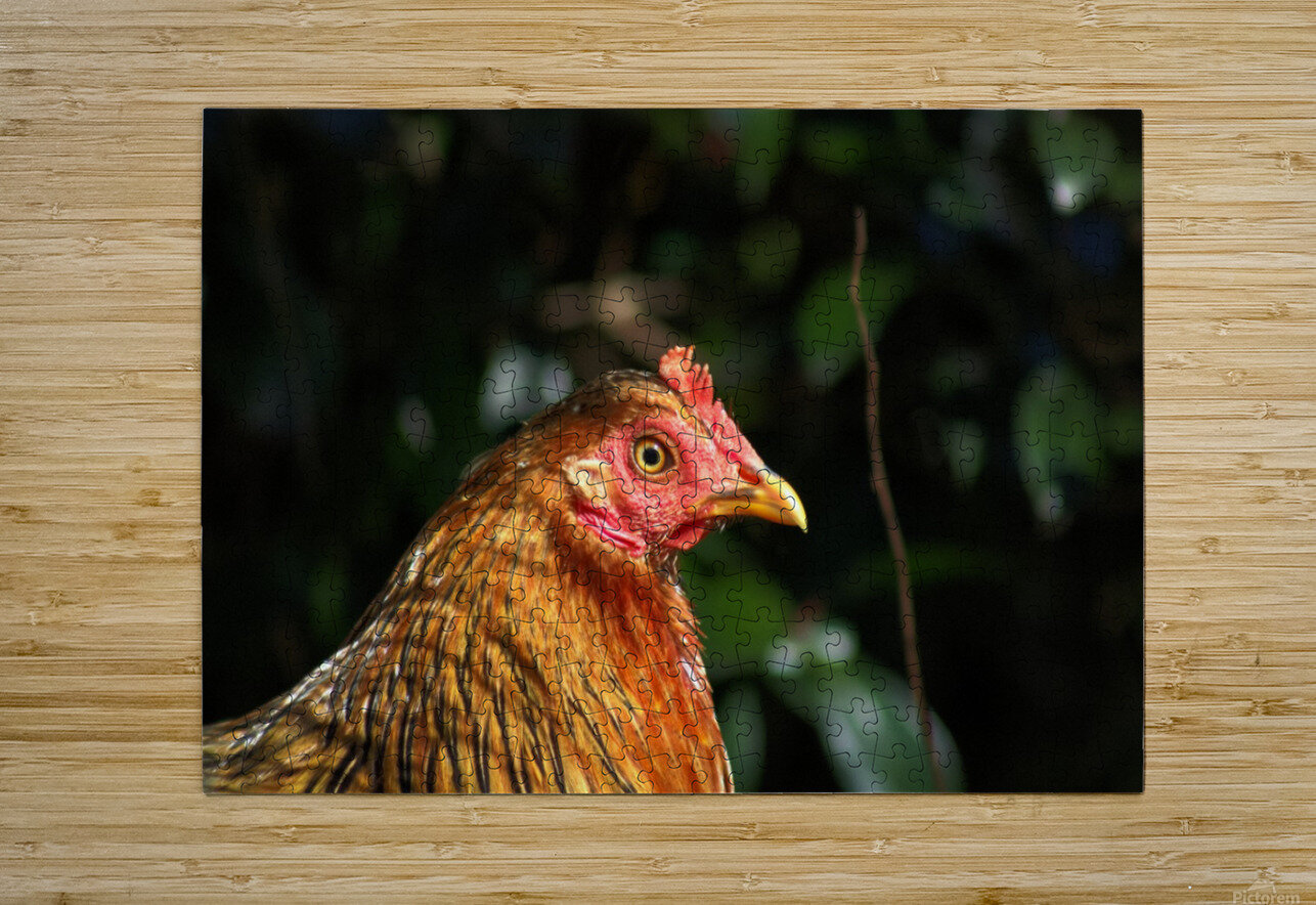 You Turkey  HD Metal print with Floating Frame on Back