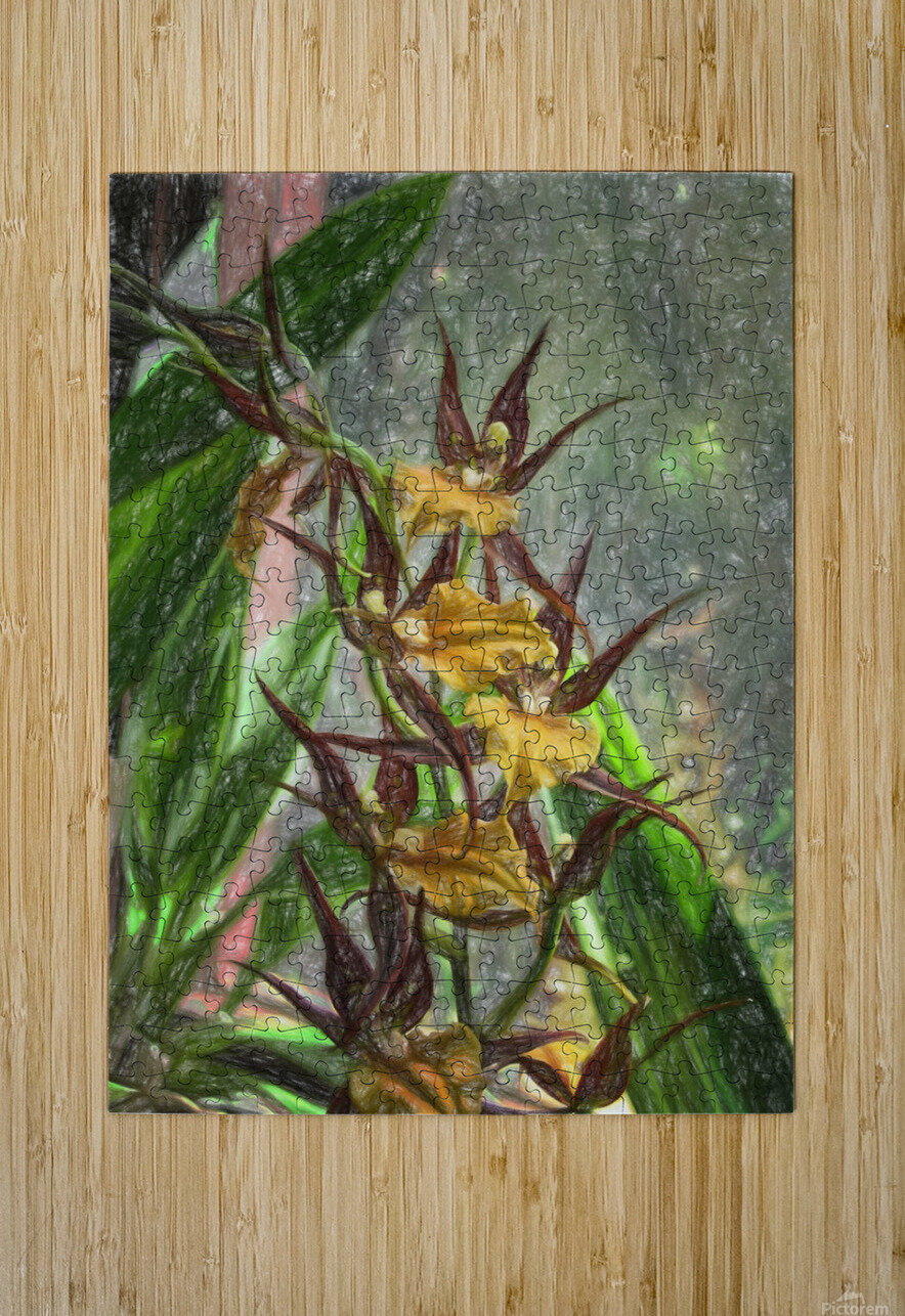 Hawaiian Orchids Color Pencil   HD Metal print with Floating Frame on Back
