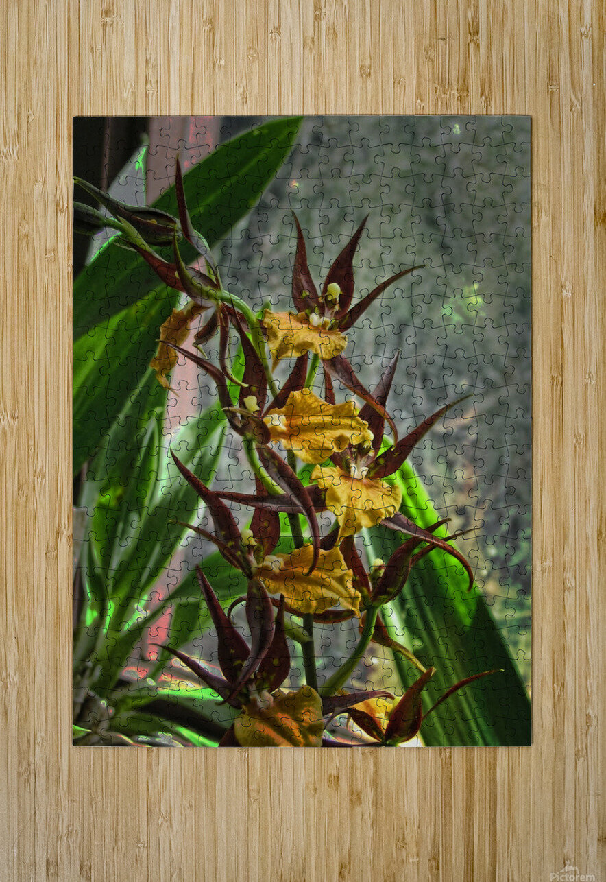 Hawaiian Orchids   HD Metal print with Floating Frame on Back