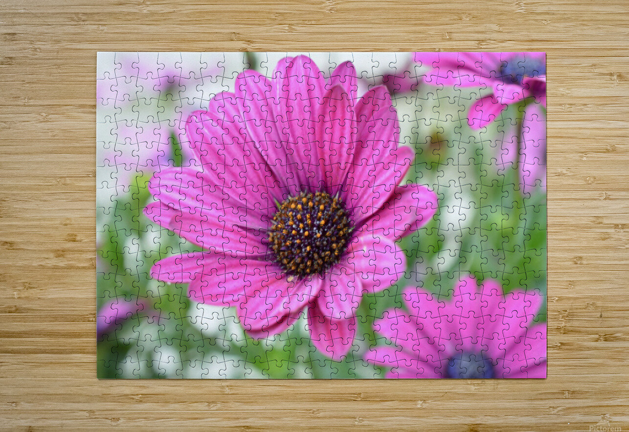 Floral Photography   HD Metal print with Floating Frame on Back