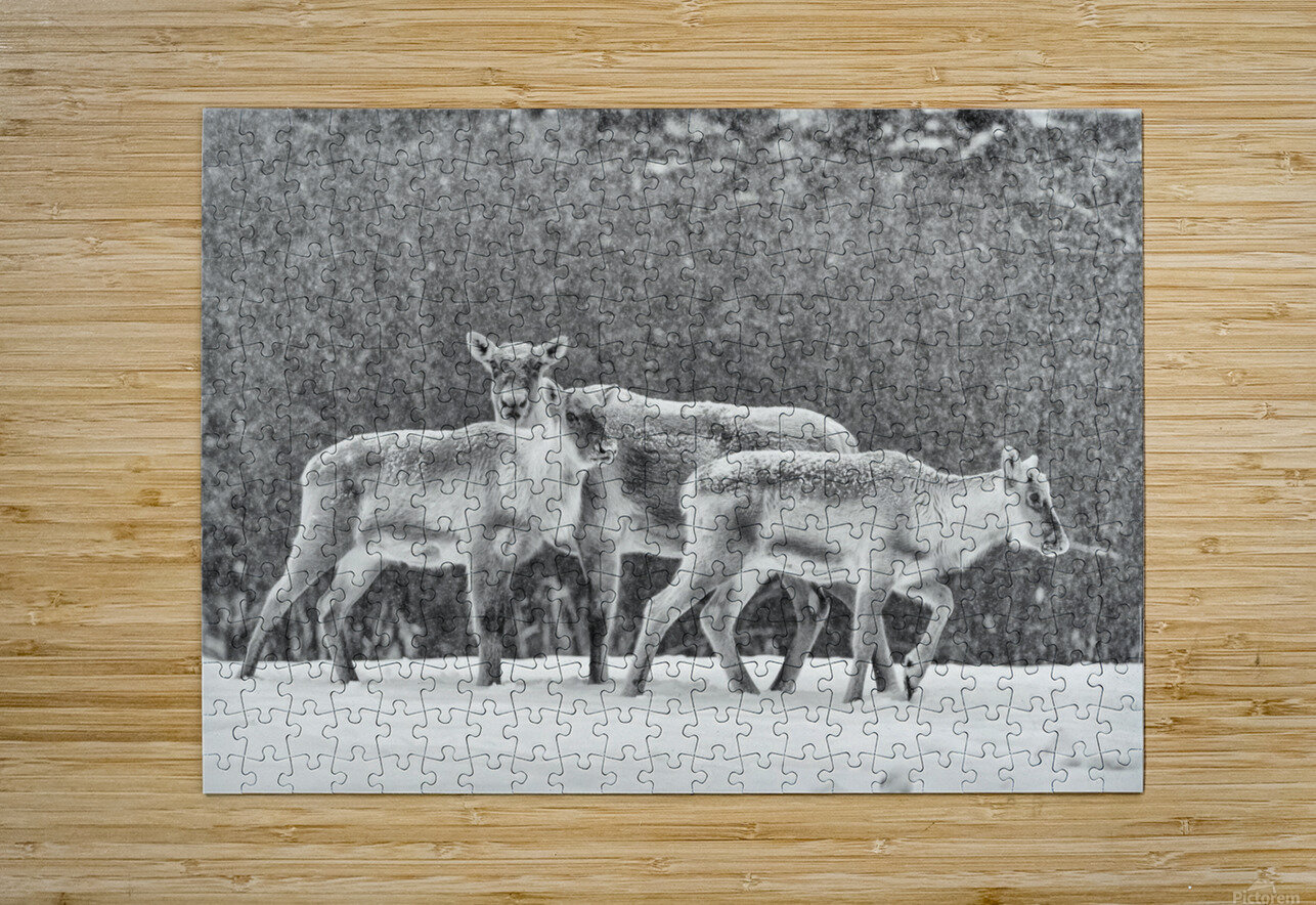 The Trio  HD Metal print with Floating Frame on Back