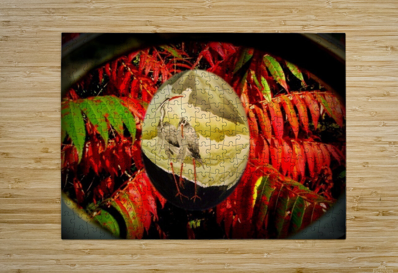 Cranes and red leaves  HD Metal print with Floating Frame on Back
