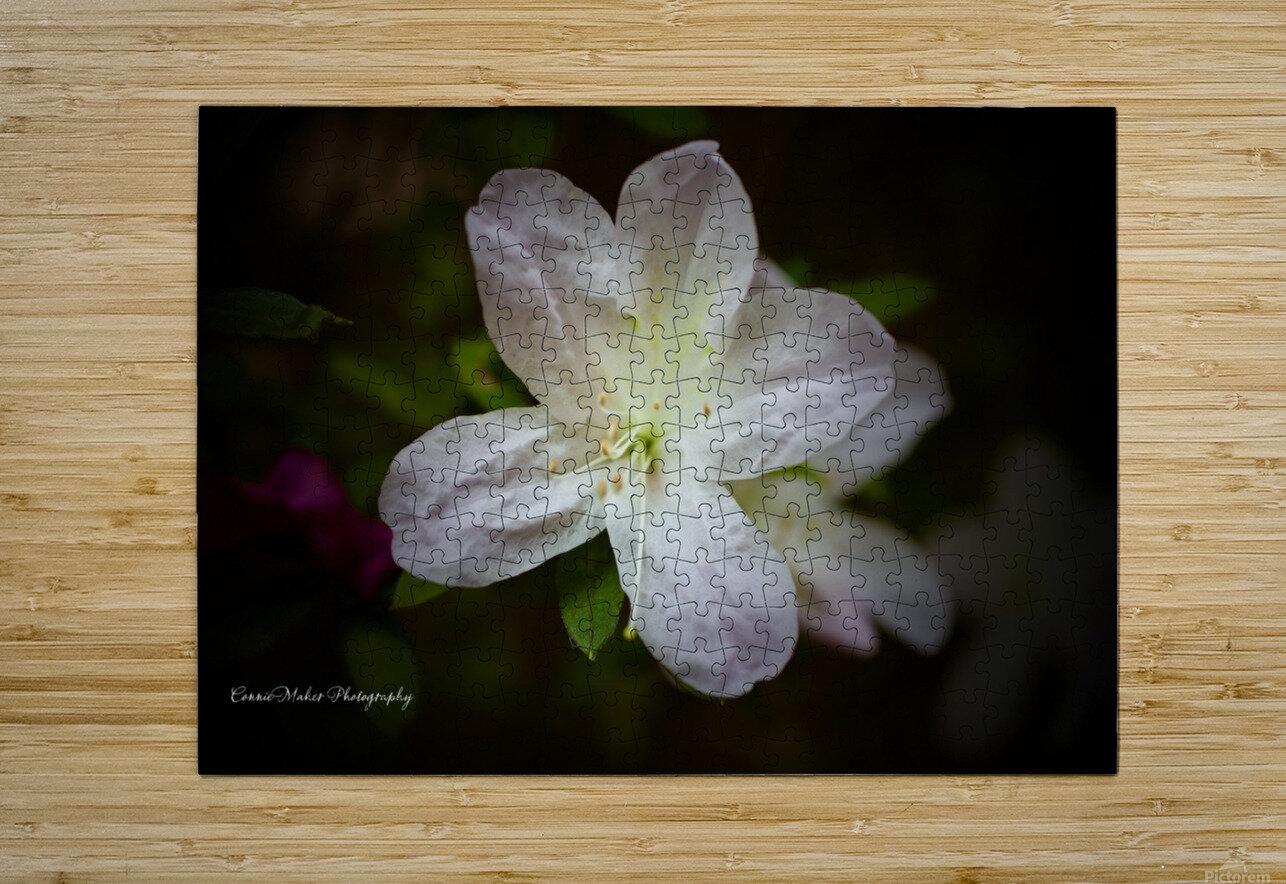 White Azalea   HD Metal print with Floating Frame on Back