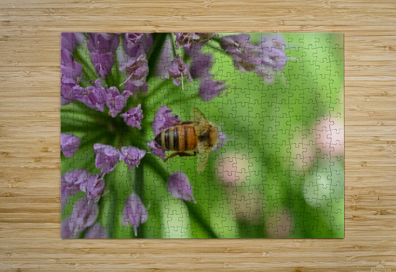 Bees & Flowers Photography  HD Metal print with Floating Frame on Back