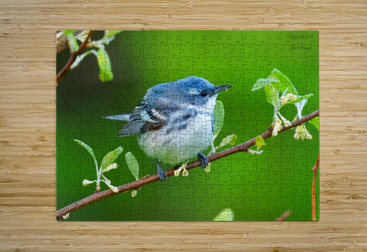 Birds  HD Metal print with Floating Frame on Back