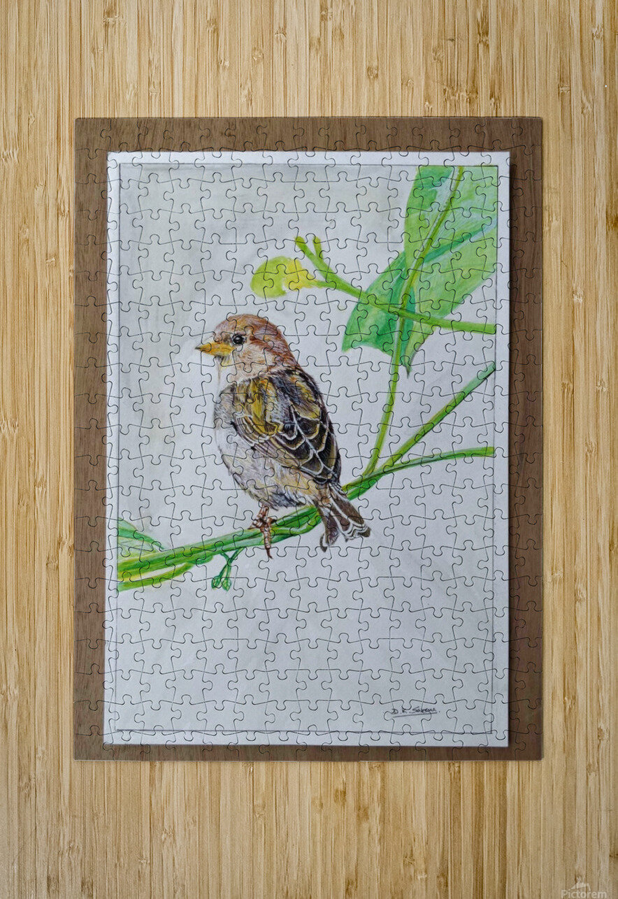 Sparrow_DKS  HD Metal print with Floating Frame on Back