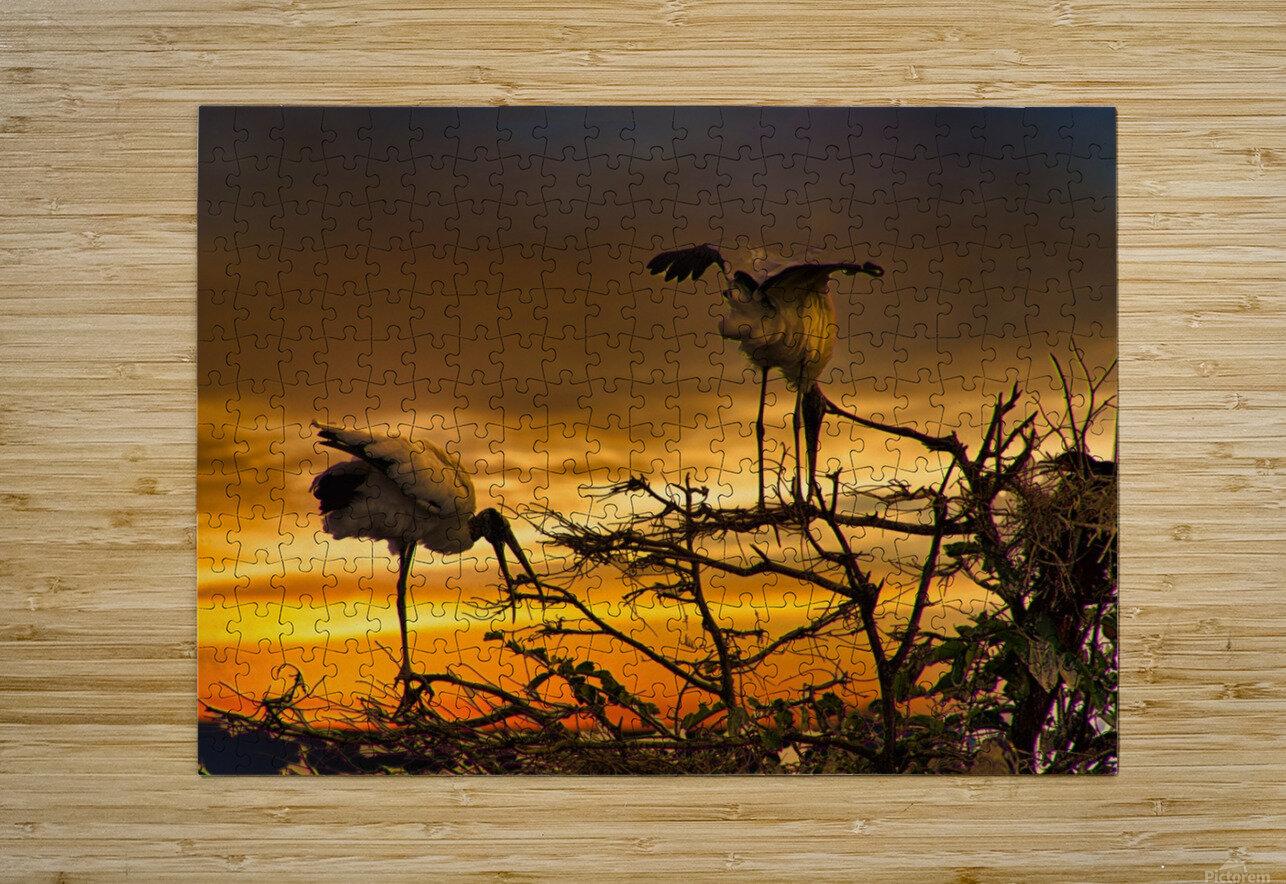Wood Storks at Sunset  HD Metal print with Floating Frame on Back