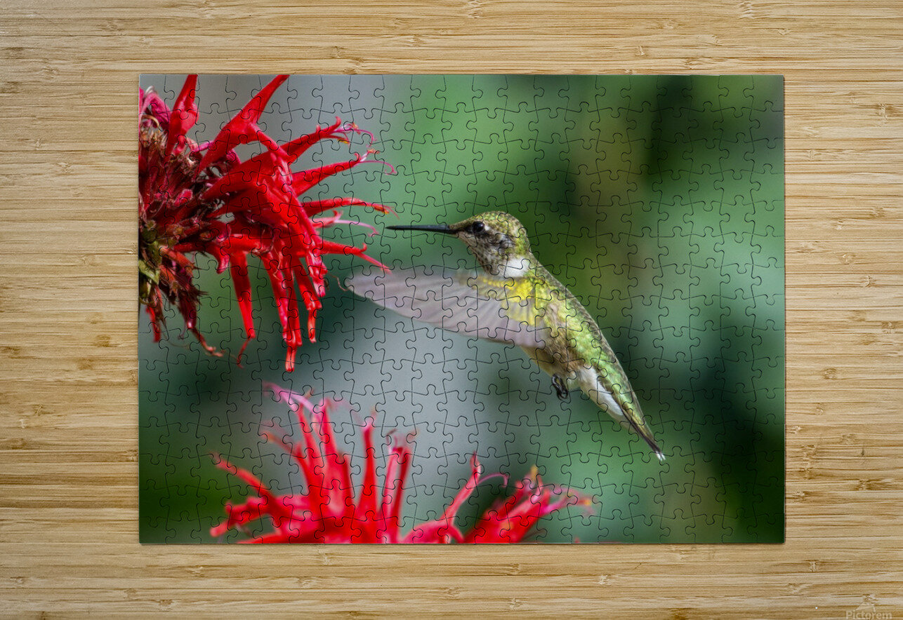 The Happy Bird  HD Metal print with Floating Frame on Back