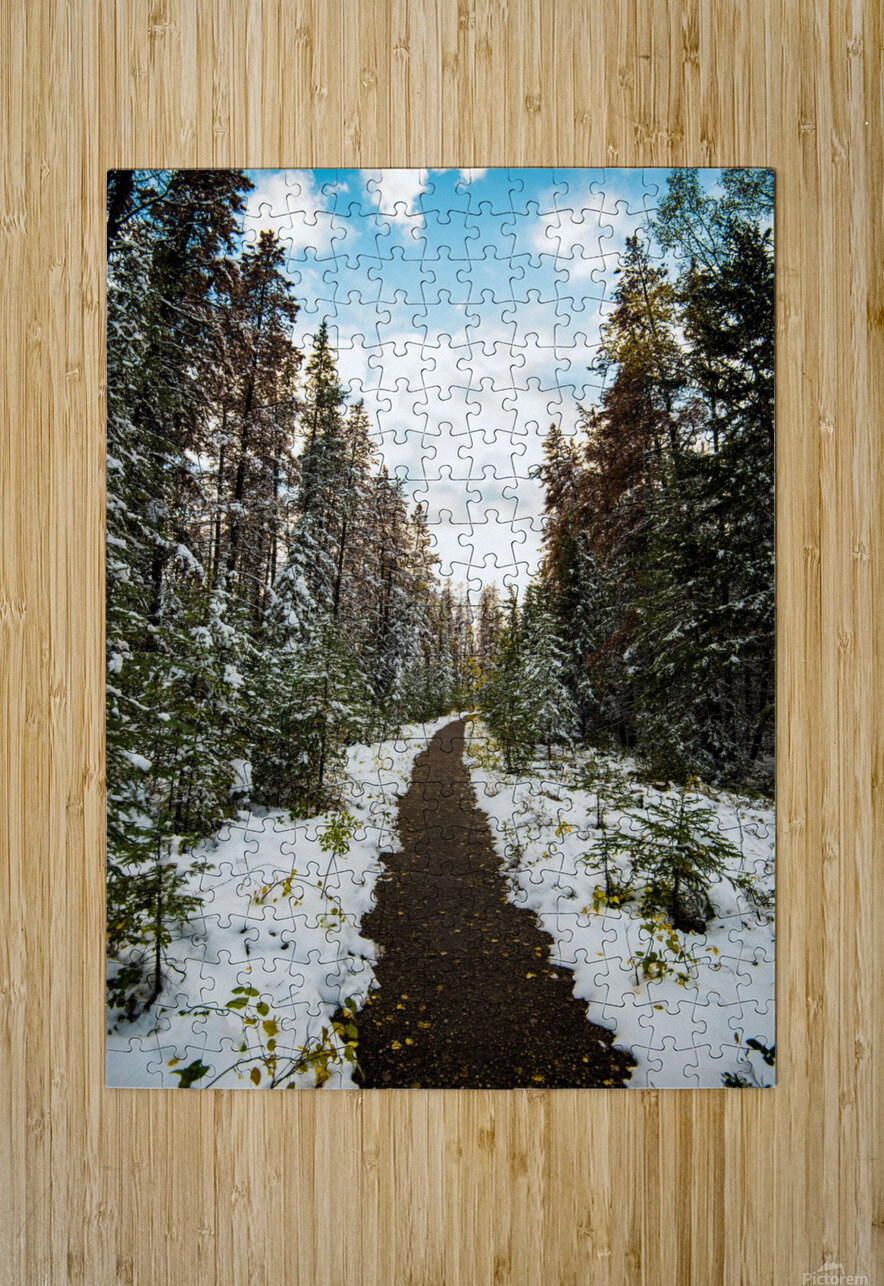 Winter Path  HD Metal print with Floating Frame on Back