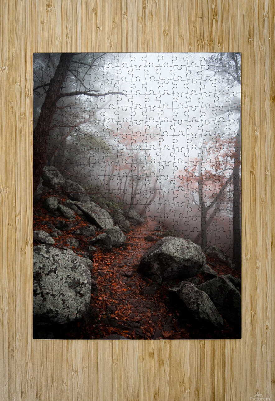 Moody Forest  HD Metal print with Floating Frame on Back