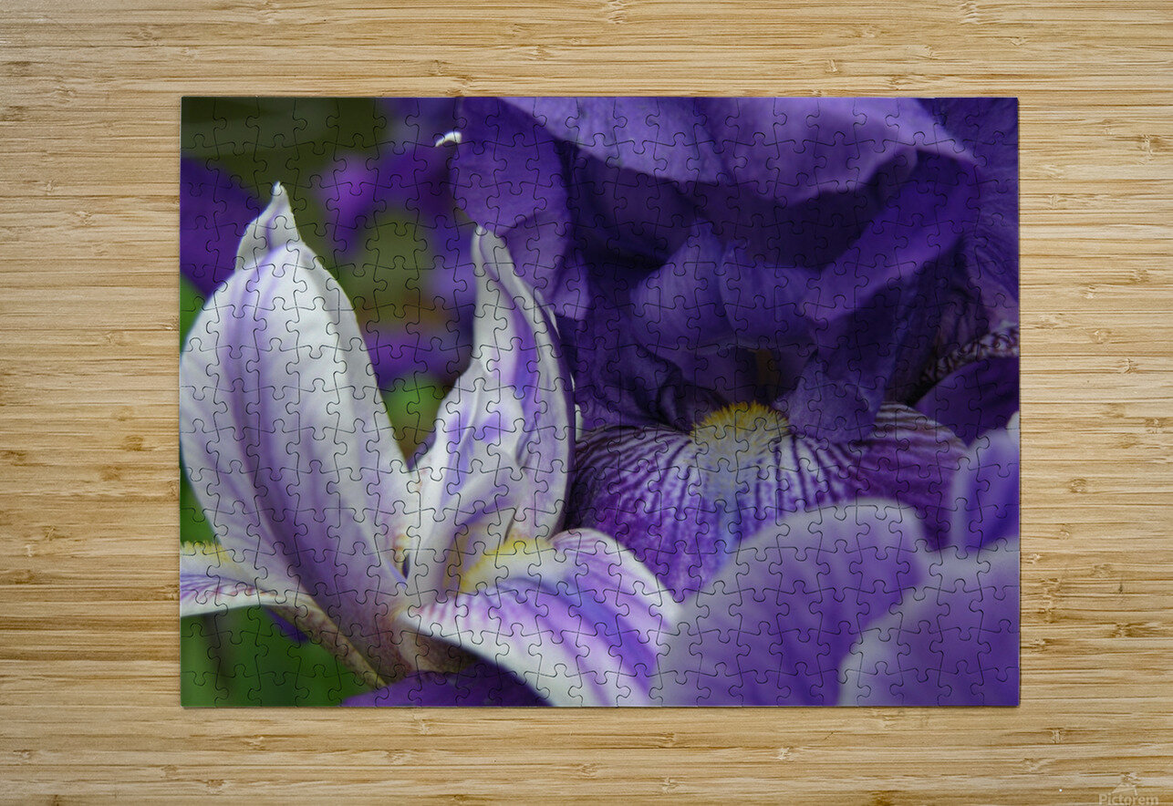 Floral Iris Photograph   HD Metal print with Floating Frame on Back