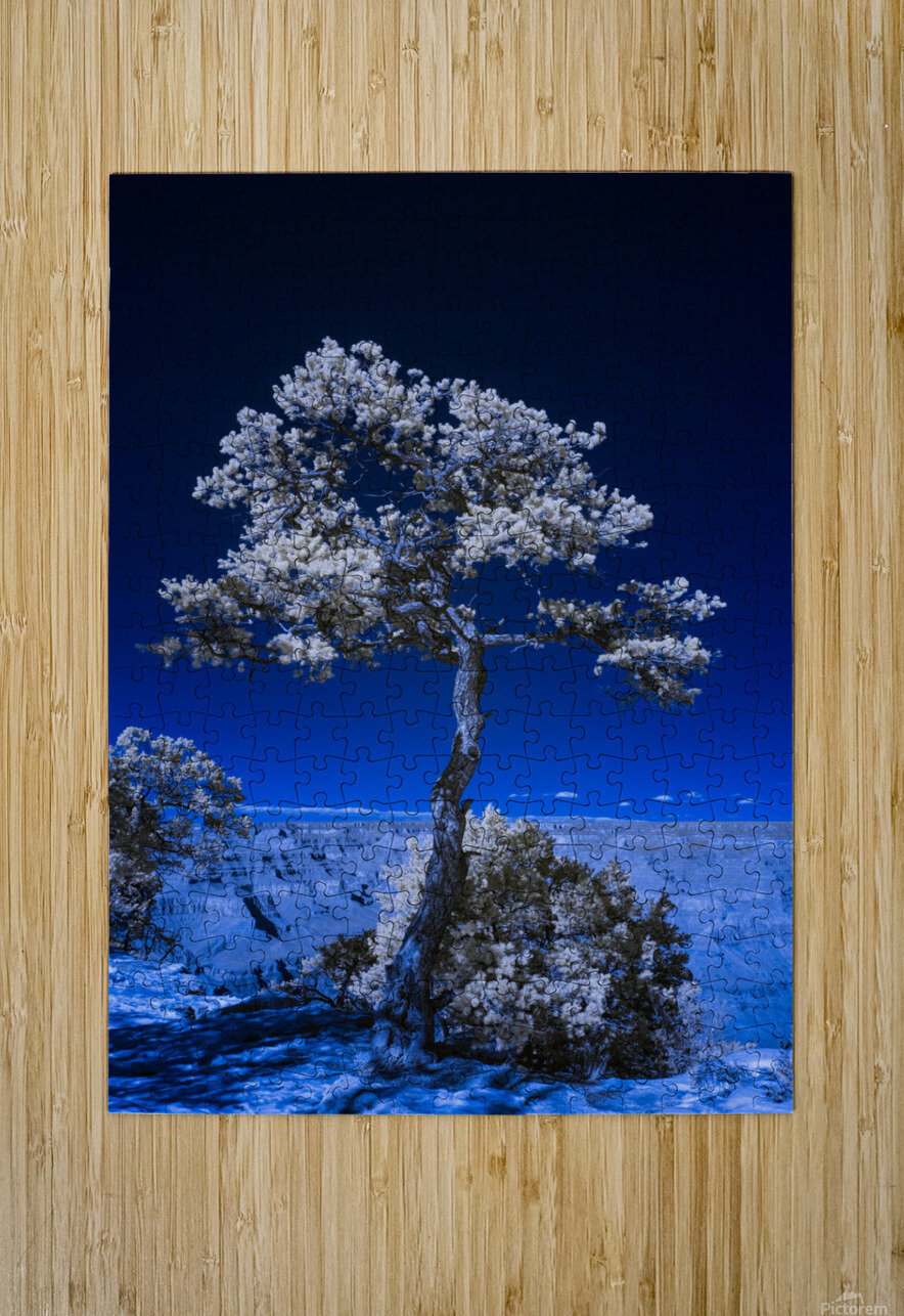Tree of life 3  HD Metal print with Floating Frame on Back