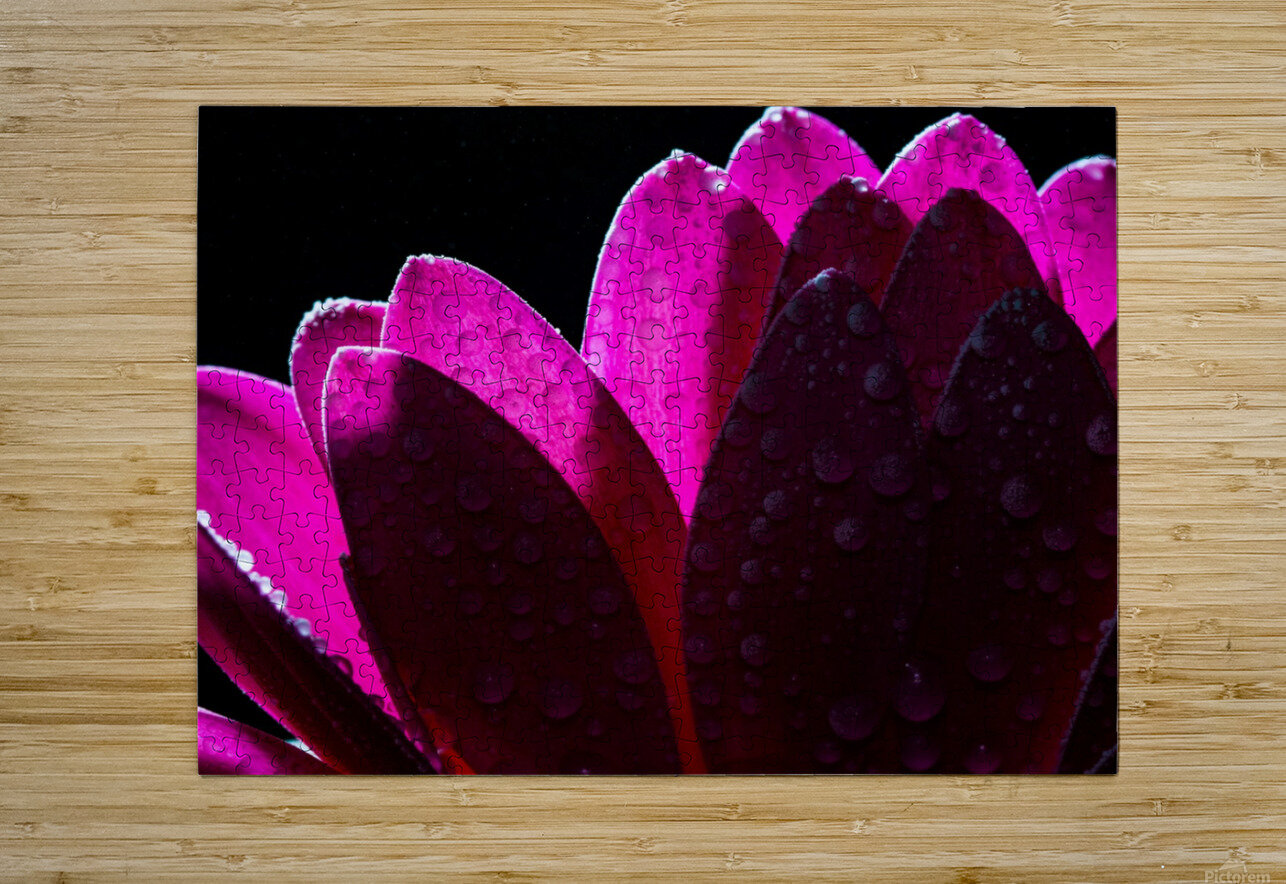 In The Light  HD Metal print with Floating Frame on Back