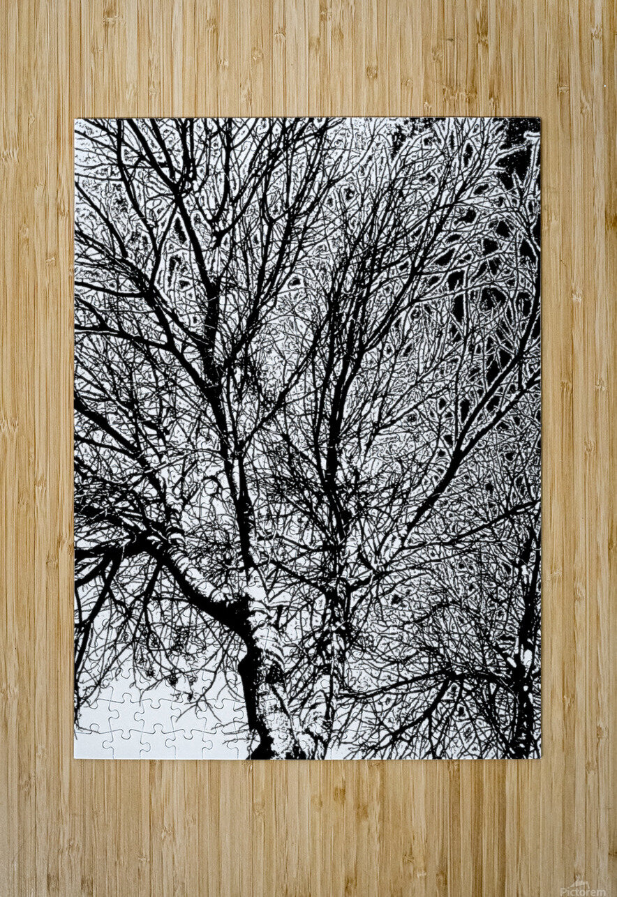 Afridaizy Black & White Trees Threshold029  HD Metal print with Floating Frame on Back