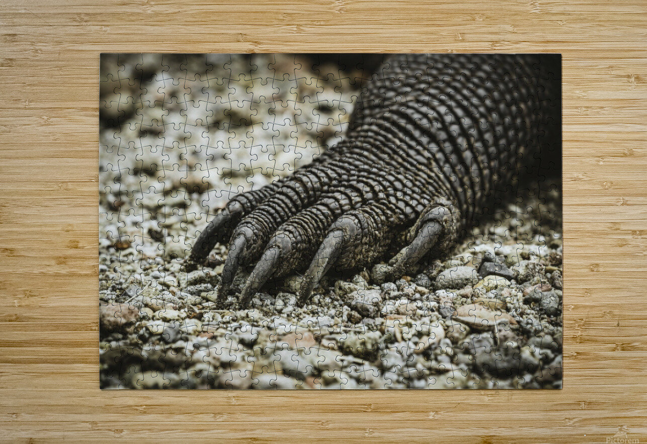 Dragons Claw  HD Metal print with Floating Frame on Back