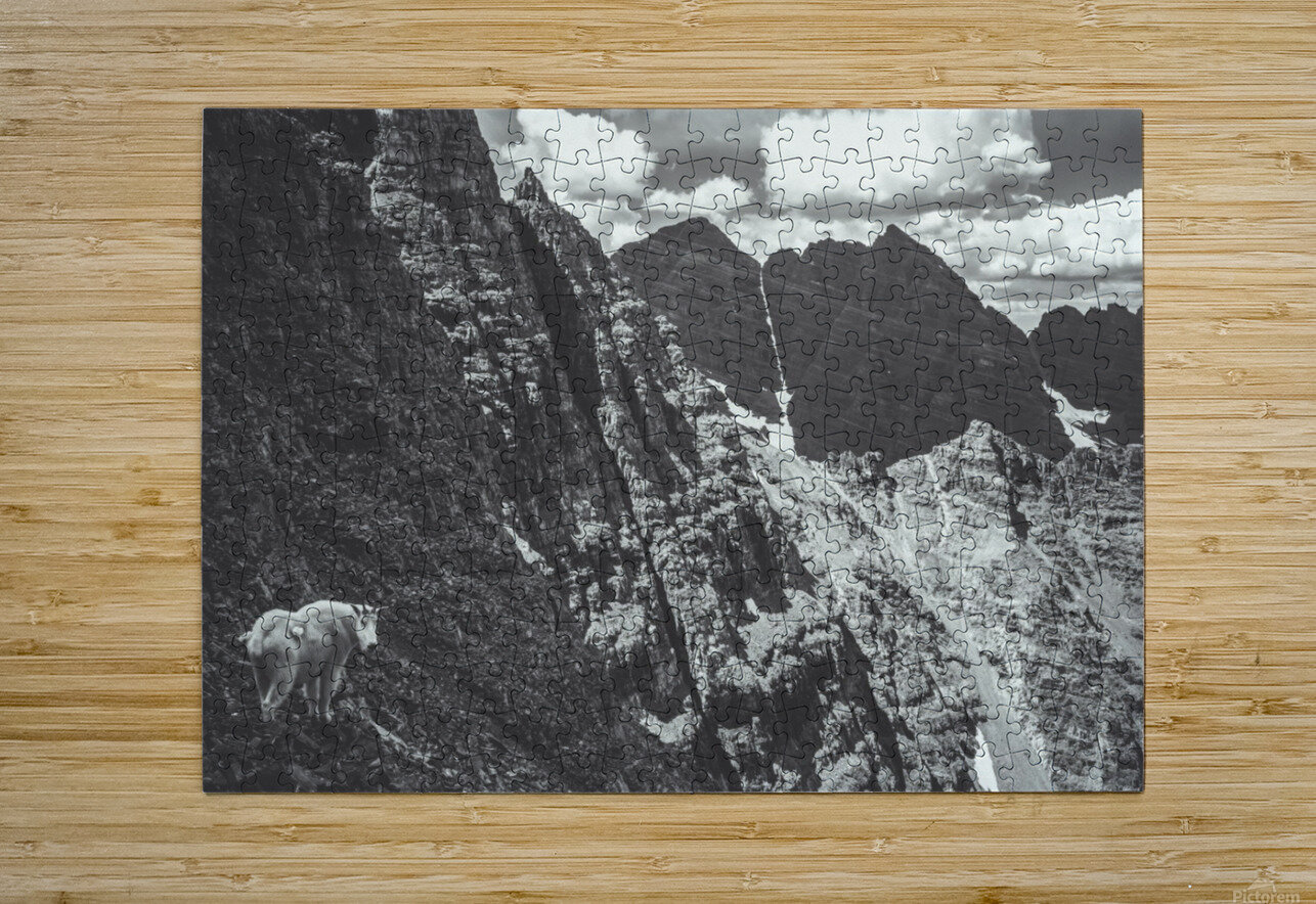 Pyramid Peak Mountain Goat  HD Metal print with Floating Frame on Back