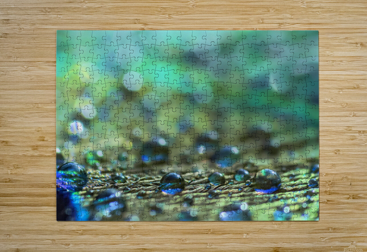 Shimmering Peacock Feather  HD Metal print with Floating Frame on Back