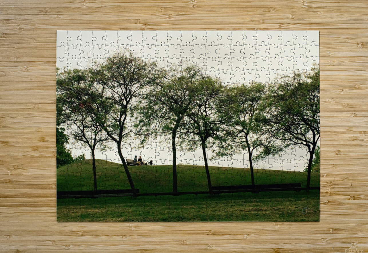 Trees  HD Metal print with Floating Frame on Back