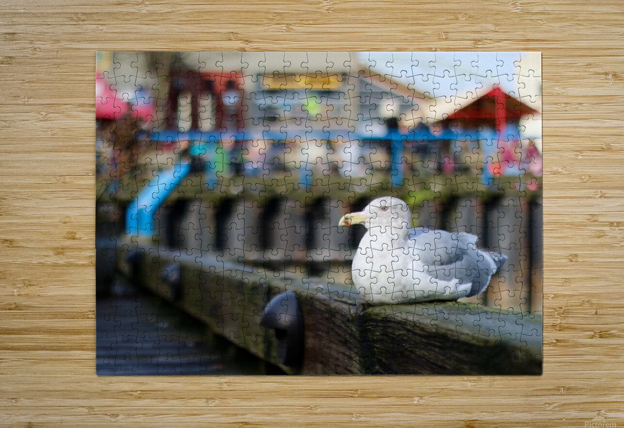 Seagul  HD Metal print with Floating Frame on Back