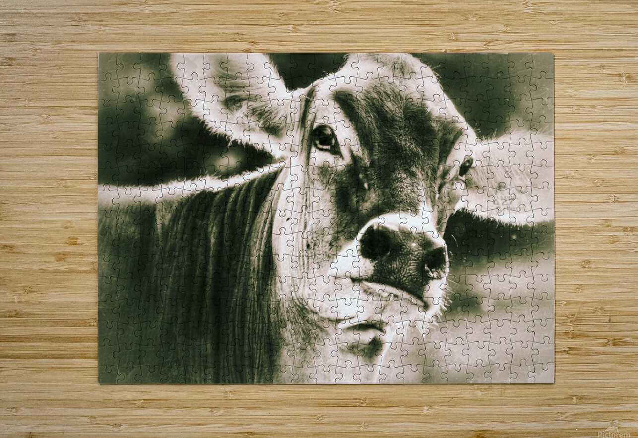 Gitane  HD Metal print with Floating Frame on Back