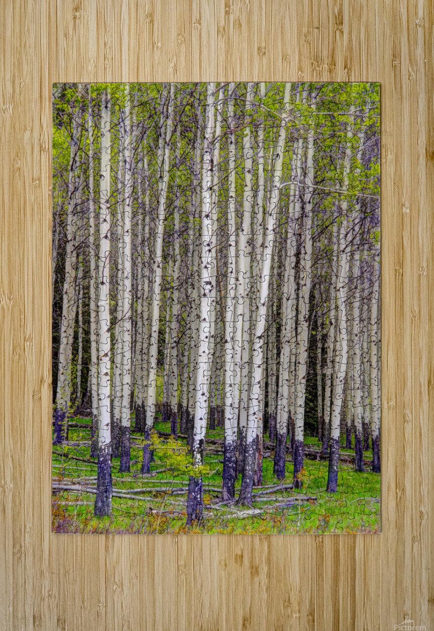 Aspens In Banff National Park  HD Metal print with Floating Frame on Back