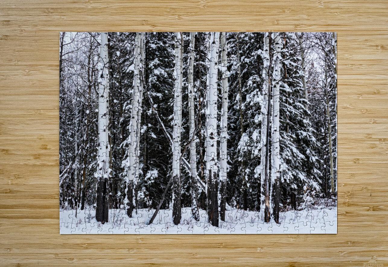 Aspens Snow Blanket Banff National Park  HD Metal print with Floating Frame on Back