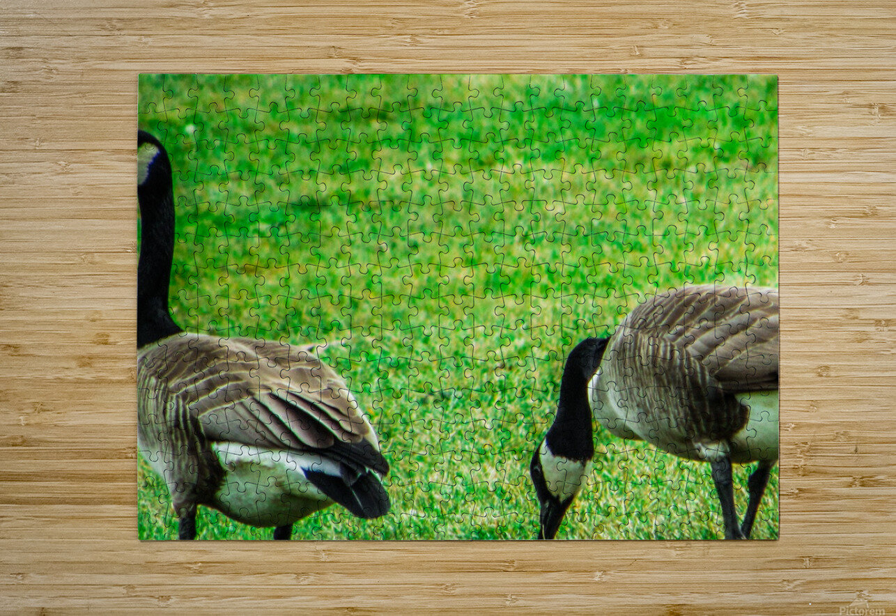Geese  HD Metal print with Floating Frame on Back