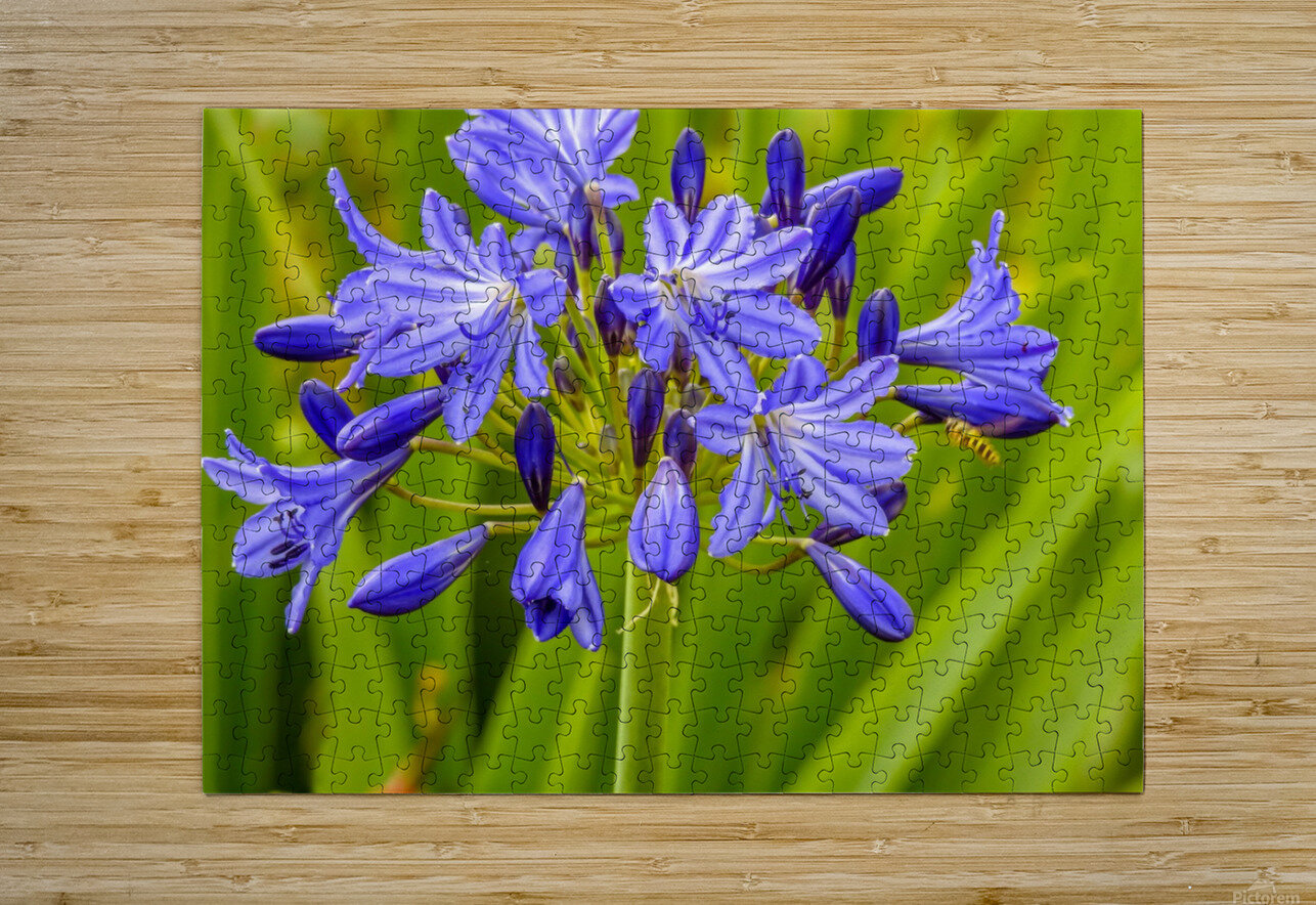 Close up of purple flowers  HD Metal print with Floating Frame on Back