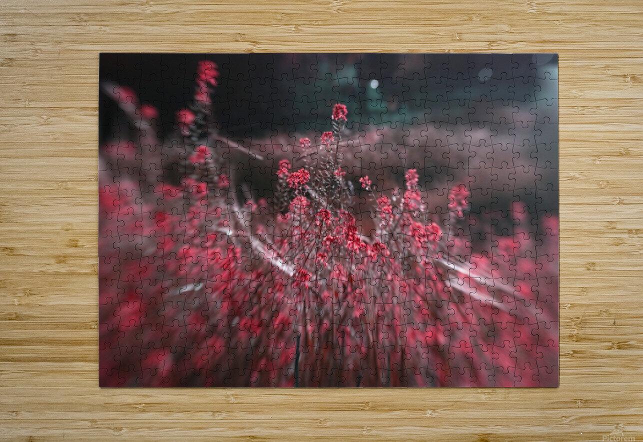 Shine 1  HD Metal print with Floating Frame on Back