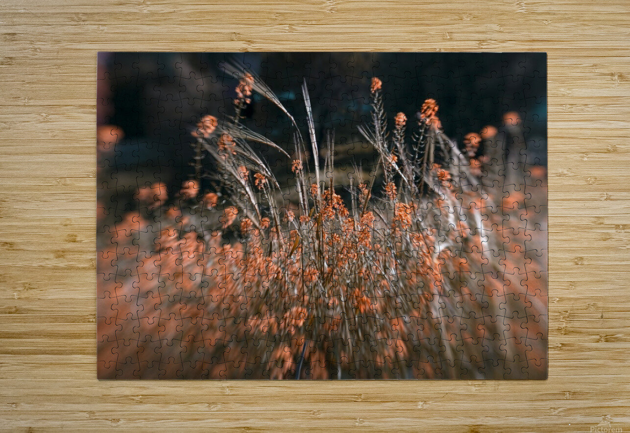 Shine 2  HD Metal print with Floating Frame on Back