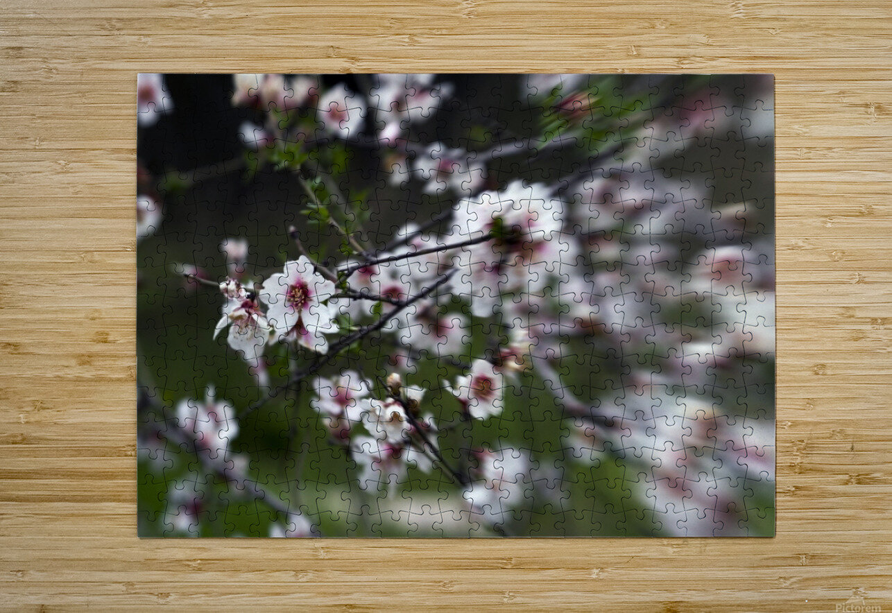 Flowering almonds 1  HD Metal print with Floating Frame on Back