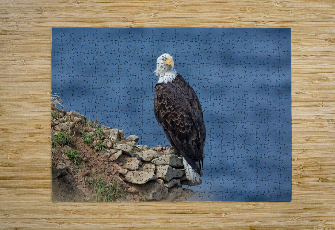 Perched and Proud  HD Metal print with Floating Frame on Back