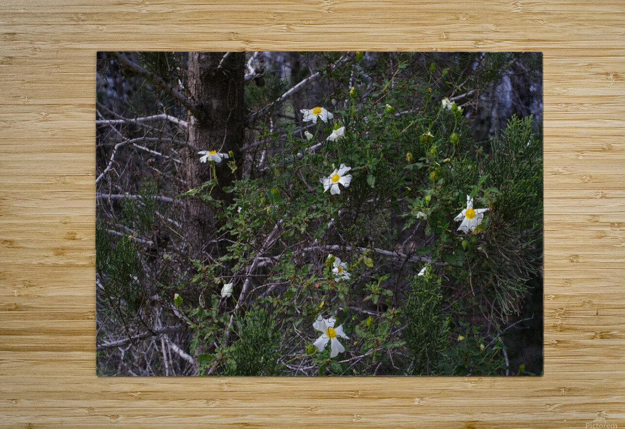 Forest flowers  HD Metal print with Floating Frame on Back