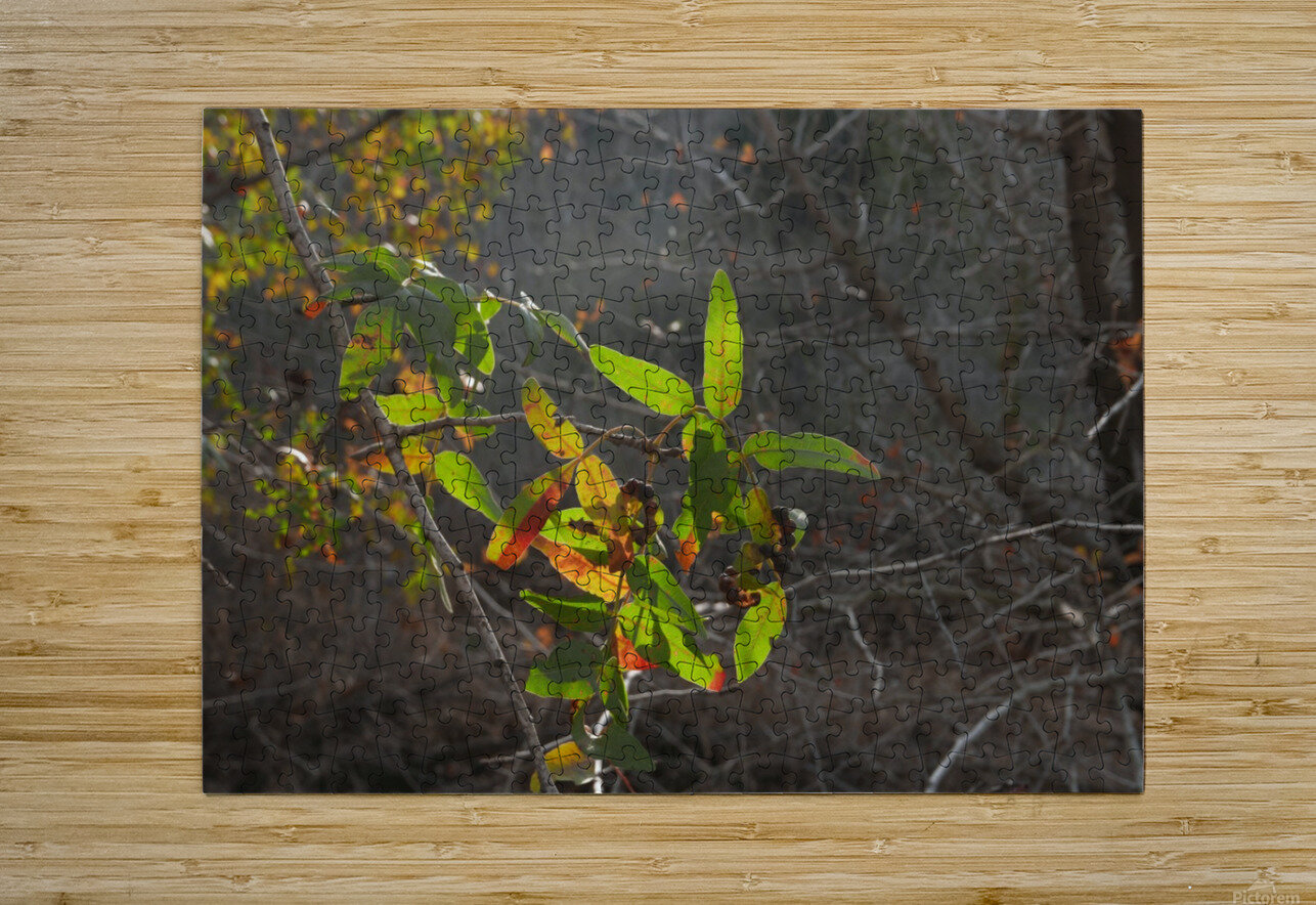 Autumn light  HD Metal print with Floating Frame on Back