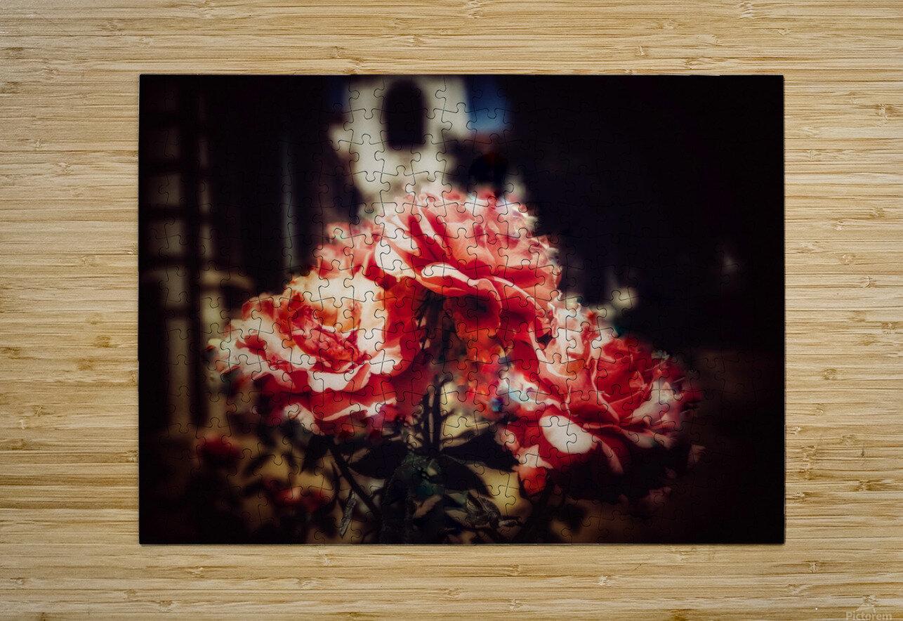 Rose  HD Metal print with Floating Frame on Back