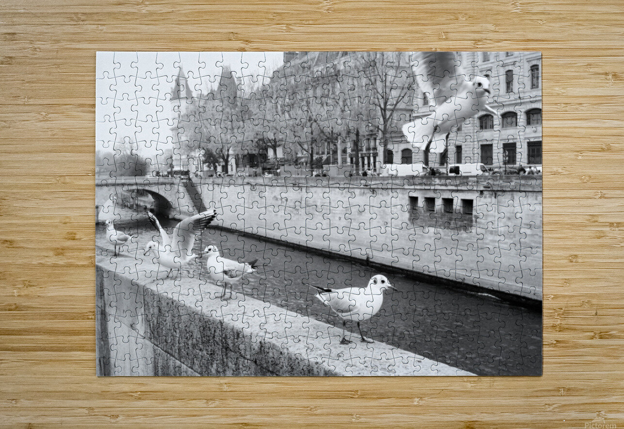 Les Oiseaux  HD Metal print with Floating Frame on Back
