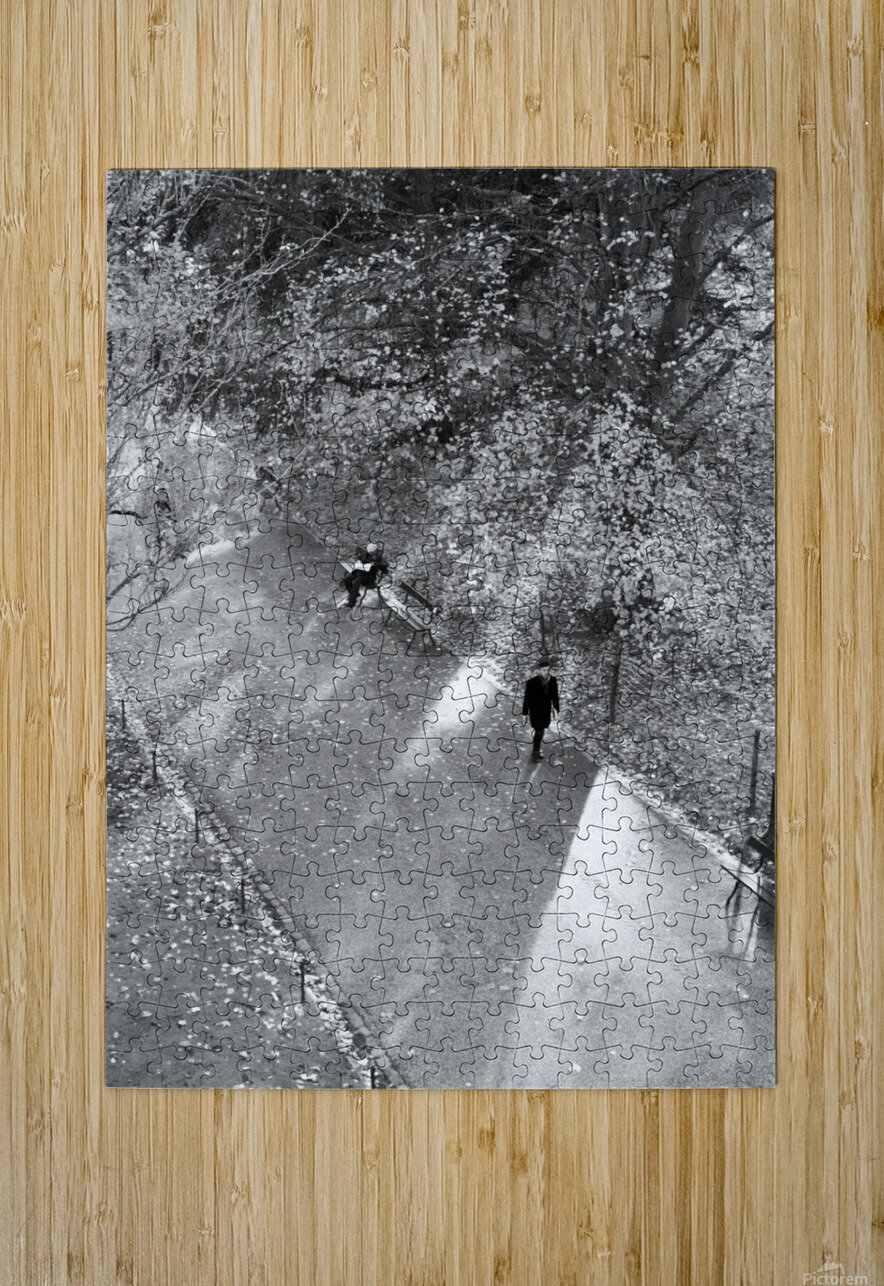 Winter Shadows Buttes Chaumont  HD Metal print with Floating Frame on Back