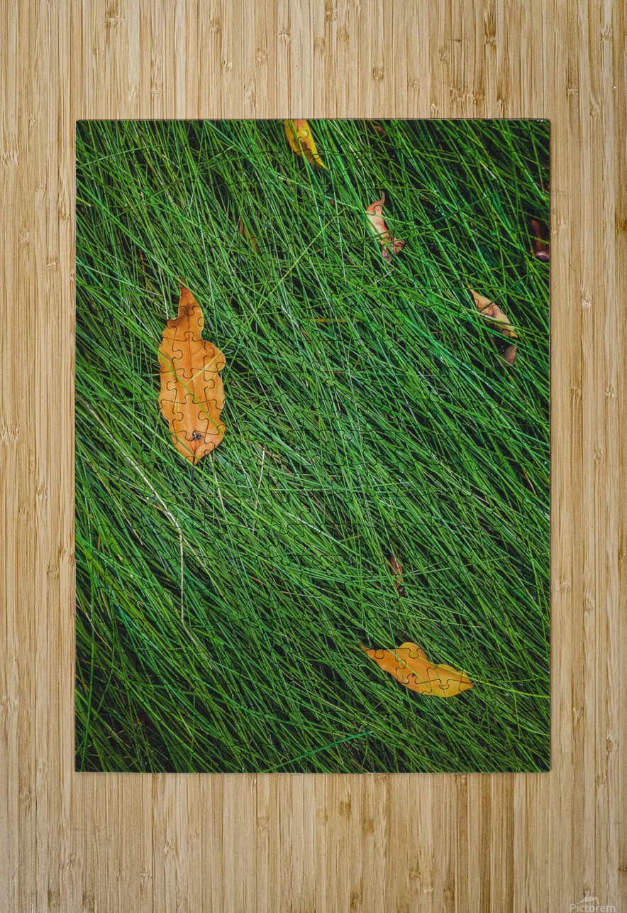 green grass field background with dry brown leaves  HD Metal print with Floating Frame on Back