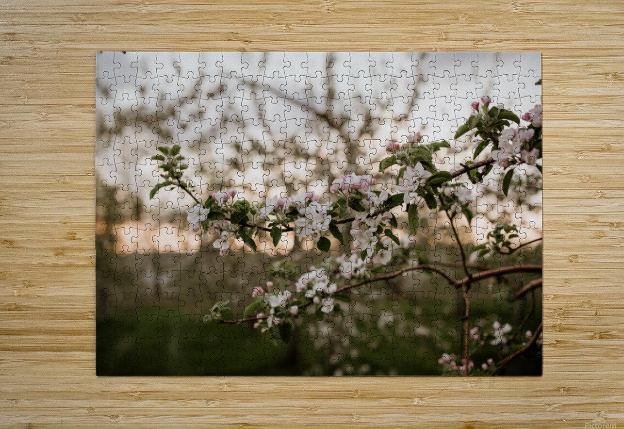Fleurs de pommes  Impression métal HD avec cadre flottant sur le dos