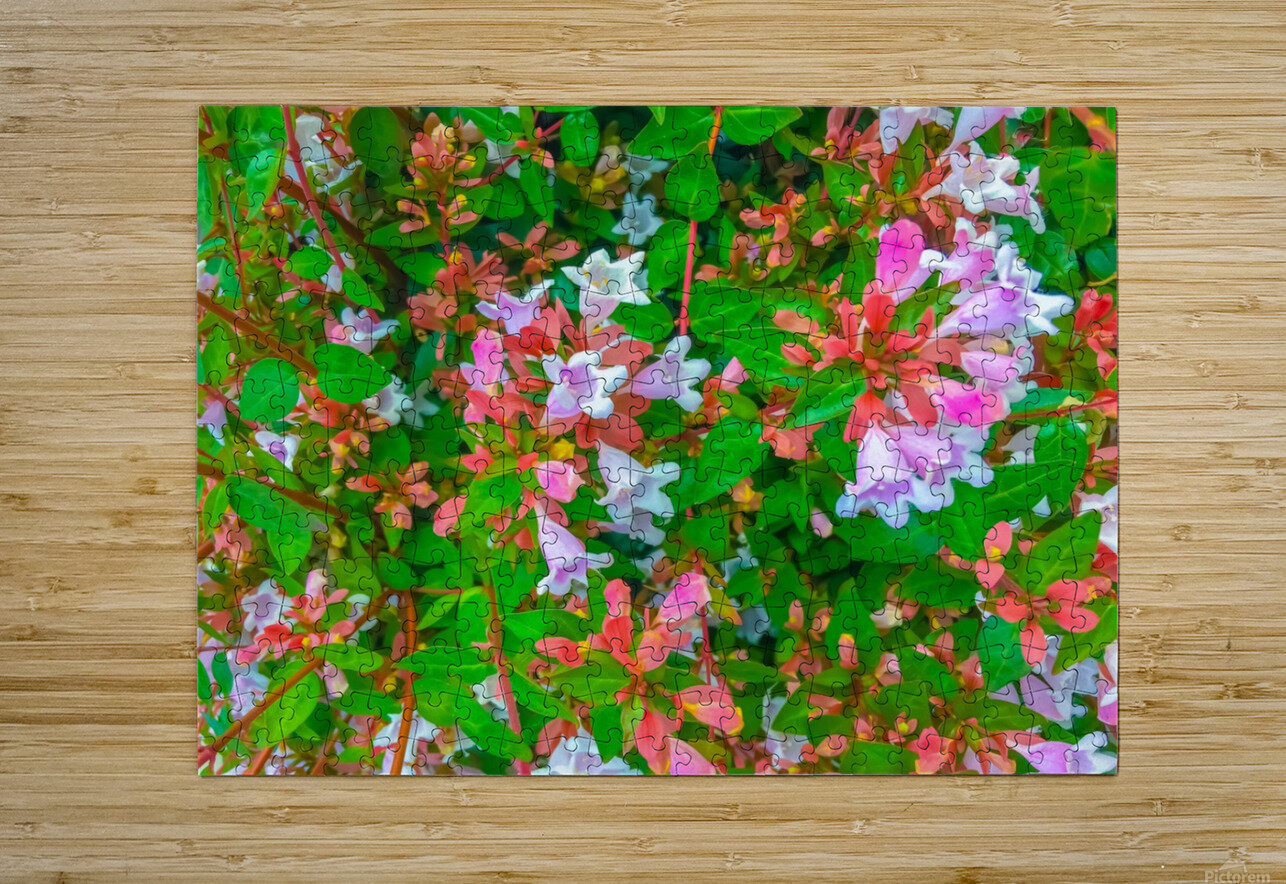 closeup blooming pink flowers with green leaves  HD Metal print with Floating Frame on Back